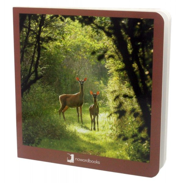 libros imágenes animales del bosque